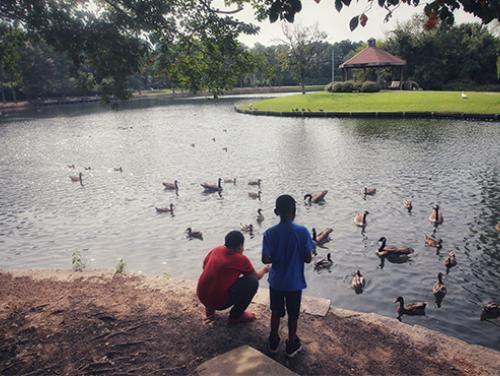 rocky mount feeding ducks in pond